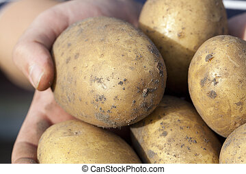 batatas, mão