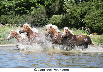Batch of chestnut horses running in the wather - Batch of ...
