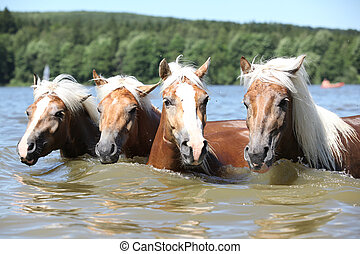 Batch of chestnut horses swimming in the water in summer