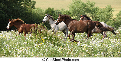 Batch of horses running in flowered scene in spring