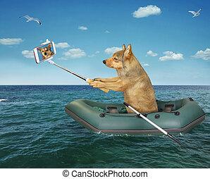 bateau, chien, marques, selfie, caoutchouc