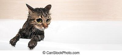 bathing cat panoramic mockup