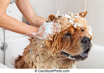 Bathroom to a dog chow chow - Bubble Bath a lovely dog chow...