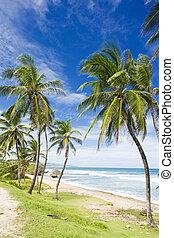 Bathsheba, Barbados, Caribbean