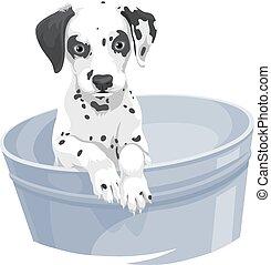 bathtub., vetorial, cão dalmation