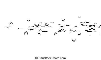 Bats flying isolated on white background - Animation flying...