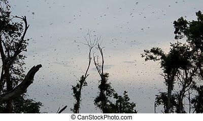 bats, the greatest migration of mammals to the world