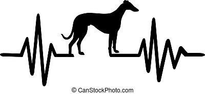 battito cardiaco, linea, levriero, cane