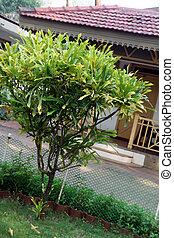 batyst, willa, otoczony, soczysty, zielony, ogród