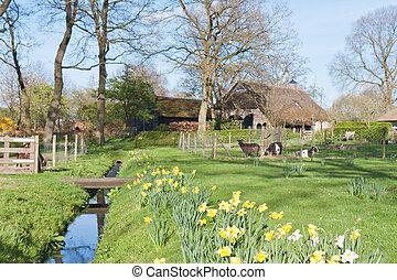 bauernhaus, ländlich, ziegen, szene, niederländisch