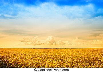 bauernhof, goldene blumen, rapsfeld