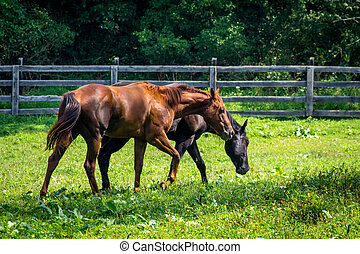 bauernhof, pferd ranch