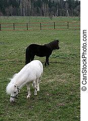 bauernhof, pony
