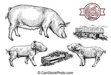 bauernhoftiere, skizzen, gezeichnet, hand., schweine