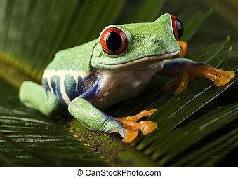 baum, äugig, frosch, rotes