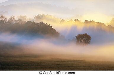 baum, in, sonnenstrahl, nebel