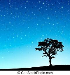 baum, mit, nacht himmel
