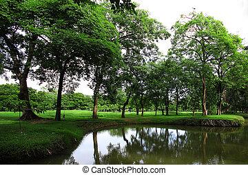 baum, park, grün