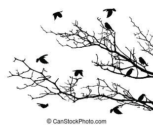 baum, silhouette, vögel