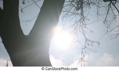 baum, silhouetten, baum, trockene zweige, in, der, sky.,...