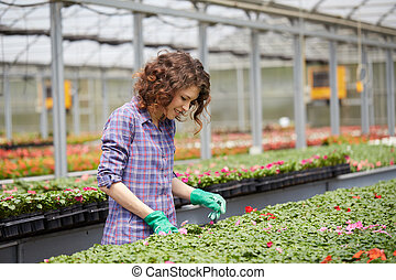 baumschule, pflanze, frau, arbeitende