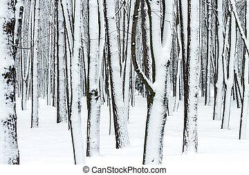 baumstämme winter, wald, bedeckt, mit, schnee
