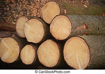 Baumstaemme abholbereit - nachhaltiger Energielieferant Holz