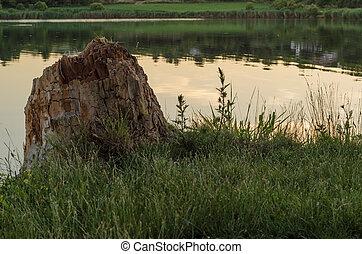 Baumstumpf am Ufer - Baumstumpf der am Ufer nah am Wasser...
