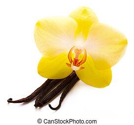 baunilha, varas, com, flor