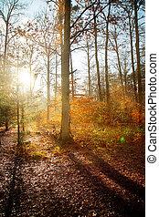Bautiful Forest in Autumn Season