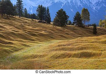 bavaria, 牧草地, 高山