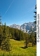 Bavarian Alps - Glade in Bavarian Alps, Germany