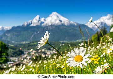 Artistic view of landscape in the Bavarian Alps with beautiful flowers and blurry Watzmann mountain in the background in springtime, Nationalpark Berchtesgadener Land, Bavaria, Germany