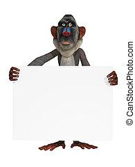 baviaan, met, een, leeg teken
