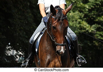 Bay beautiful sport horse with bridle portrait - Bay...