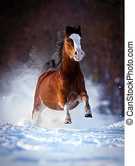 Bay horse gallops in winter