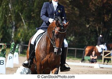 Bay horse portrait during dressage show