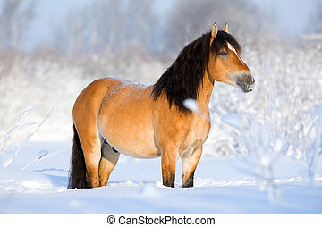 Bay horse standing in winter