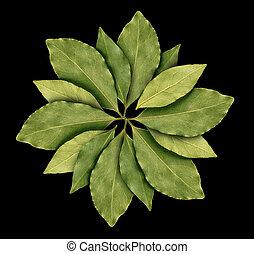bay leaf on black