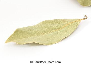 Bay leaf spice on white background