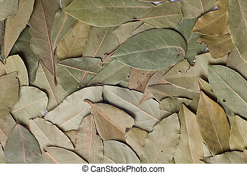 Bay leaves   - bay leaves (laurus nobilis) background