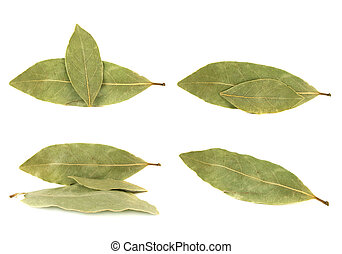 Bay leaves collection isolated on white background