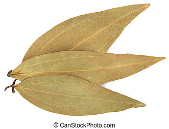 Bay leaves over white background