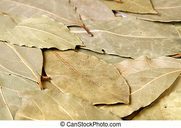 Bay leaves - Close-up of bay leaves used for cooking