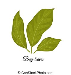 Bay leaves vector illustration isolated on white background. Ve