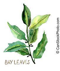 Bay leaves, watercolor illustration