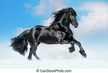 bay lusitano horse in winter field