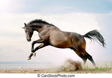 bay stallion plays