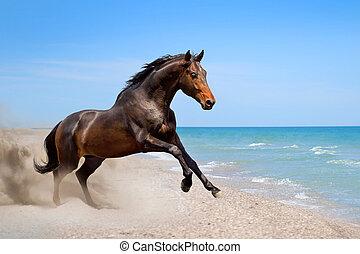 Bay stallion run - Beautiful horse run along the shore of ...