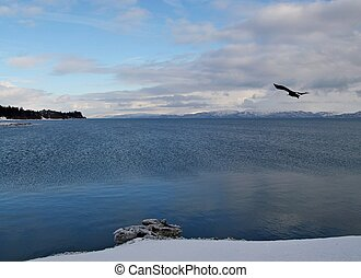 View of Mud Bay near Homer Alaska in winter with snow in the foreground, clouds in the blue sky, and an eagle soaring by.
